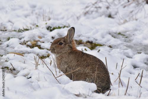 Zdjęcie XXL wspaniały królik na łące
