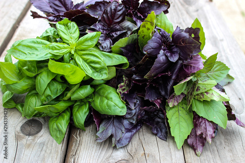 Montage in der Fensternische Kräuter Green and purple Basil in the garden