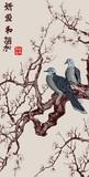 Sakura japonia gałąź wiśni - 214343843