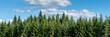 canvas print picture - Wald und blauer Himmel Panorama
