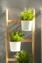 Green Tree Pots Hanging On Wall With Sunlight