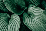 Green leaves nature plants. Abstract background - 214346447
