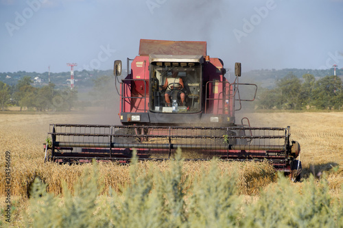 Fotografie, Obraz  The old combine harvester harvests wheat. Agricultural machinery.