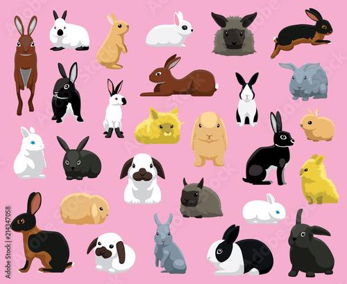 Fototapeta premium Ilustracja wektorowa kreskówka różnych ras królików domowych