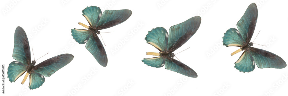 four blue butterflies on a white background