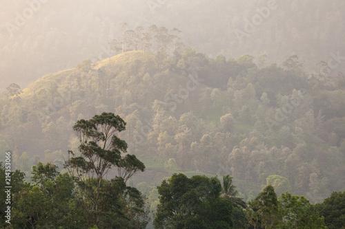 Foto op Aluminium Heuvel Rain forest. Tropical landscape, green trees at sunset