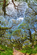 Sun Shining Through Green Canopy In Ancient Tropical Forest. Woodland Walk Past Giant Trees With Huge Trunks And Branches At Jawatan Benculuk Banyuwangi. Travel Destination In Jawa Island, Indonesia.