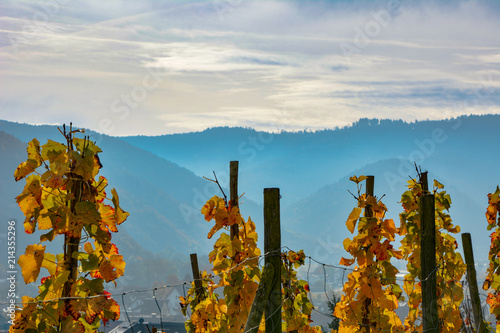 Weinrebe Herbst Ernte Berge Buy This Stock Photo And Explore