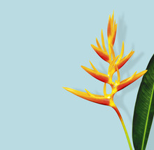 Heliconia Flower And Leaf With...