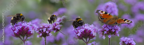 bumblebees and butterfly on the garden flower - macro photo Fototapete