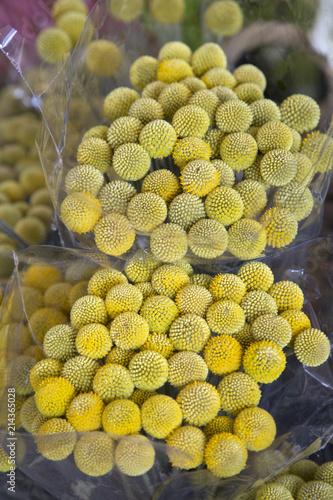 Craspedia Billy Balls Yellow Flowers Buy This Stock Photo And