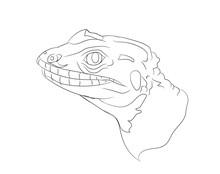 Portrait Of A Lizard, Lines, V...