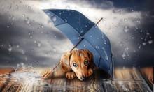 Puppy In Rain