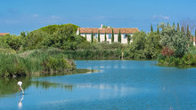 Typical Mediterranean House In Camargue, With Cypress And A Flamingo In The Lake