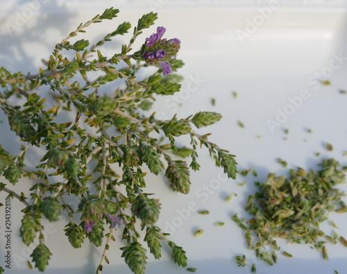 Wilder Thymian in Blüte auf weissem Teller