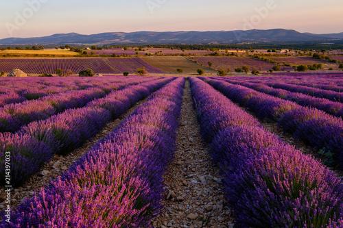 Foto op Plexiglas Crimson Champ de lavande, coucher de soleil. Ferrassières, Provence, France.