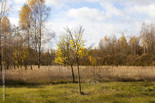 Fotografie, Obraz  foliage trees