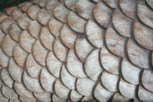 Carving Wooden Scale Of Mermaid's Tail,Texture Wooden Background,Handmade