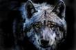 canvas print picture - das Porträt von einem Wolf