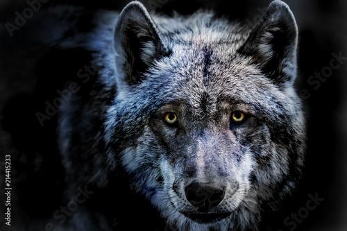 Canvas Prints Wolf das Porträt von einem Wolf