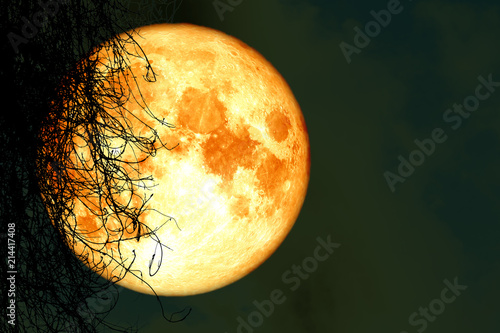 full harvest moon back silhouette dry tree in night sky