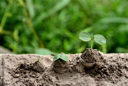 Photo Stands Roe baby plants growing out of coins in soil, nature plants coins growing soil, Business/Finance concepts.