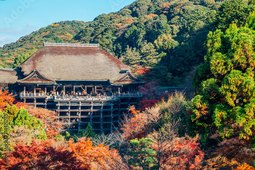 Fotobehang Kyoto Kiyomizu-dera temple with autumn maple tree in Kyoto, Japan