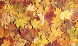 canvas print picture Seasonal autumn background of colorful leaves.