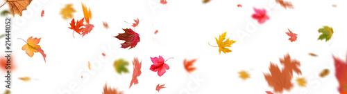 Fotografia Herbstblätter