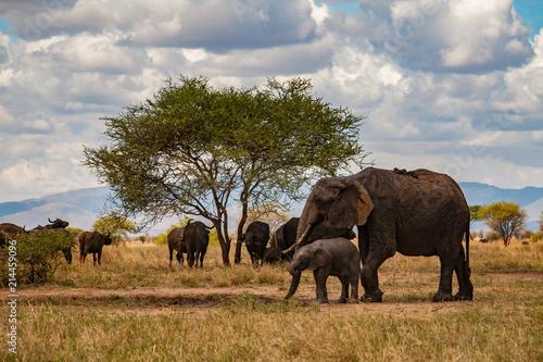Keuken foto achterwand Baobab Elephants going on the african savana