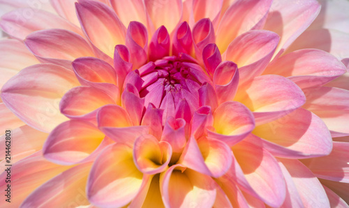 Photo Stands Macro photography Dahlia flower
