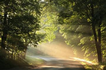 Fototapeta Maple trees lit by the morning sun
