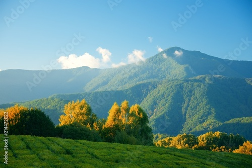 Foto op Plexiglas Blauw Evening in the mountains. Abstract landscape. Trees on a tea plantation. Mountains on the horizon.