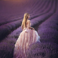 Beautiful Sensual Girl In Lavender Field At Sunset. A Woman In A Gorgeous Lush Pink Dress Walks Among The Flowers Of Lavender. Provence.