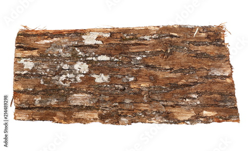 Tree oak bark with lichen isolated on white background and texture