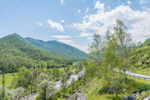 Foto op Canvas Olijf Summer mountain river in the Altai