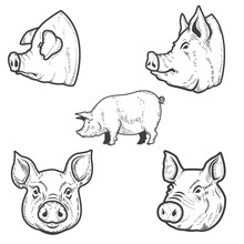 Set Of Pig Illustrations. Pork...