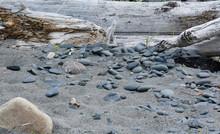 Rocks And Driftwood On Beach