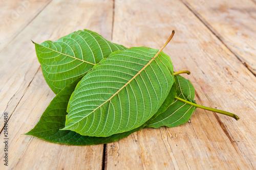 Photo Fresh kratom leaves.