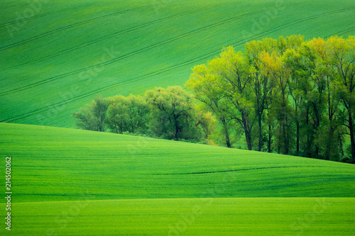 Wall Murals Pistachio Moravian fields near Nasedlovice, Moravia, Czech Republic