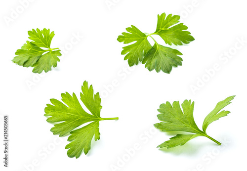 Four leaves of fresh parsley