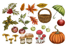 Set Of Vector In Autumn Style. Leaves, Acorns, Berries, Apples, Mushrooms, Pumpkin Isolated On White Background.