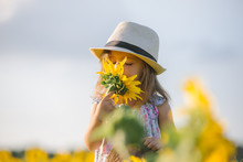 Child And Sunflower, Summer, N...