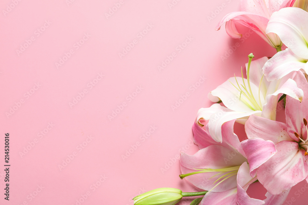 Fototapety, obrazy: Flat lay composition with beautiful blooming lily flowers on color background
