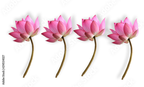 Foto op Canvas Lotusbloem Lotus flower on white background