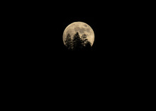 Full Moon Detail With  Forest Tree Silhouettes