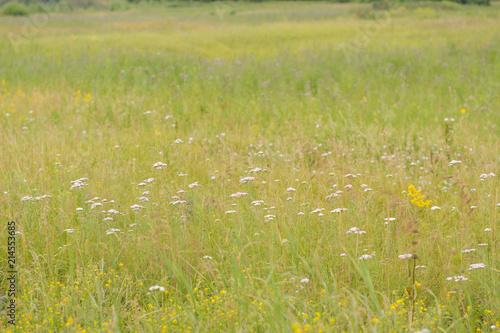 Spoed Foto op Canvas Weide, Moeras Flowering meadow in Russia.