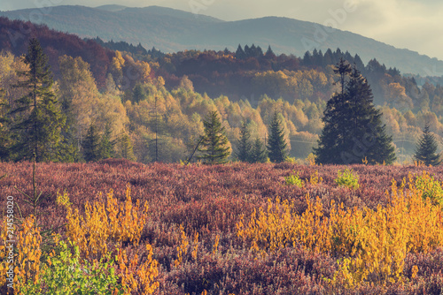 Aluminium Prints Autumn Colorful foliage in forest at fall