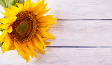 Yellow Sunflower Close Up On Wood Desk
