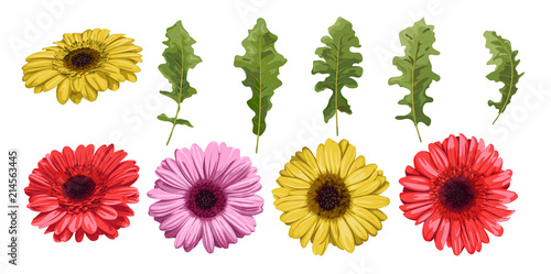 Obraz na plátně WebWatercolor flower gerbera and leaves elements isolated on white background, f